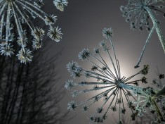 Frosted Plants Image, Latvia – National Geographic Photo of the Day