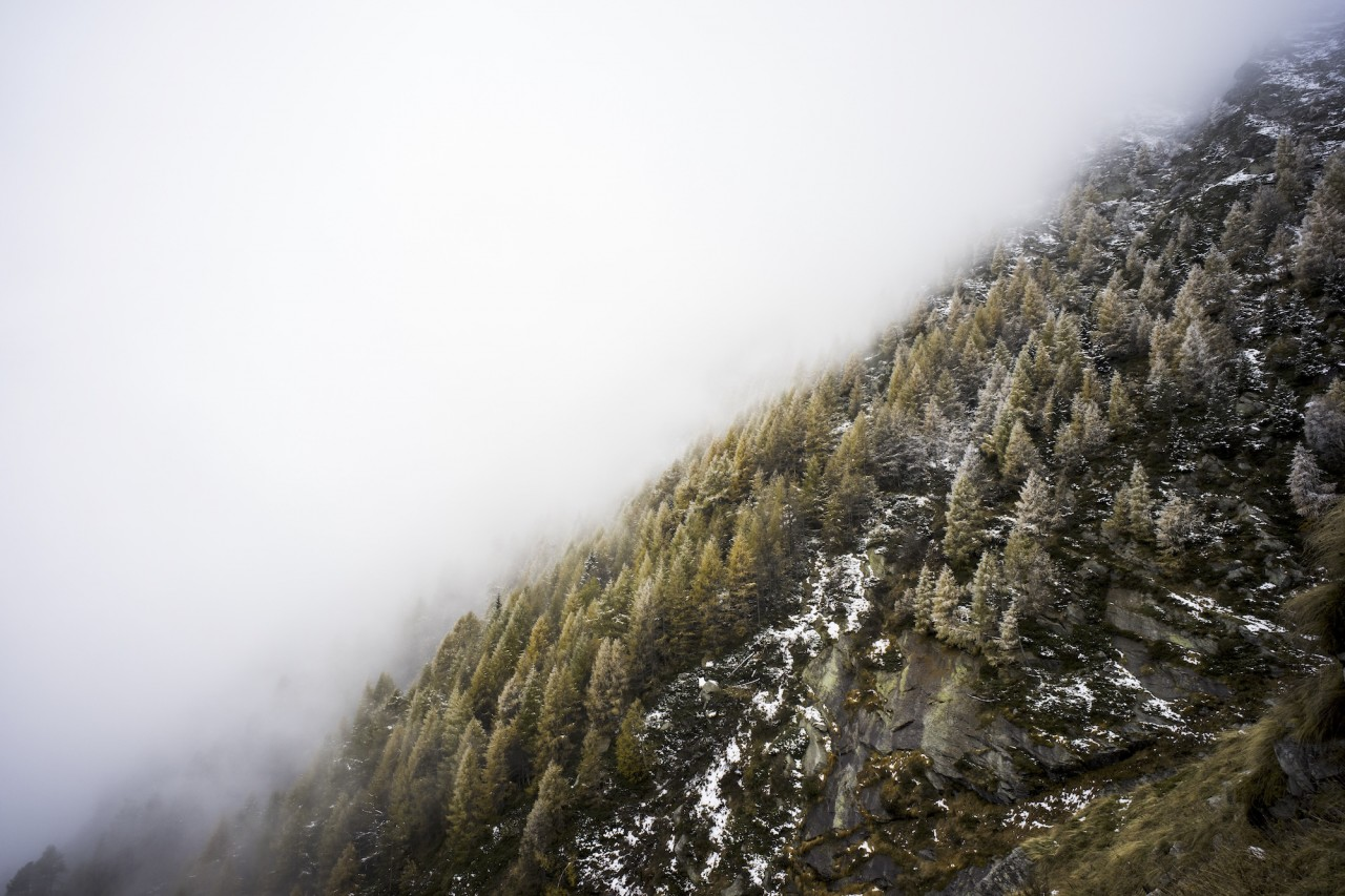 Smog covering trees in the cold mountain.