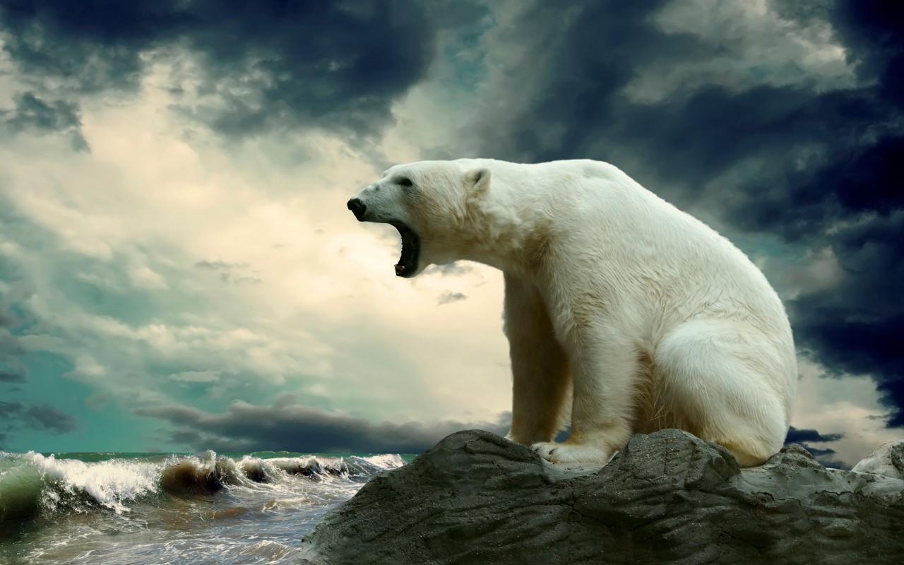 Angry polar bear. Do not disturb…