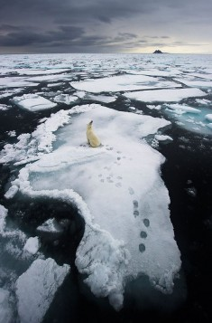 Polar bear lost.
