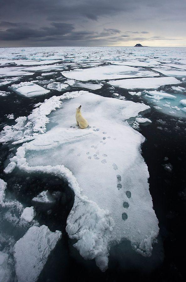Polar bear lost.