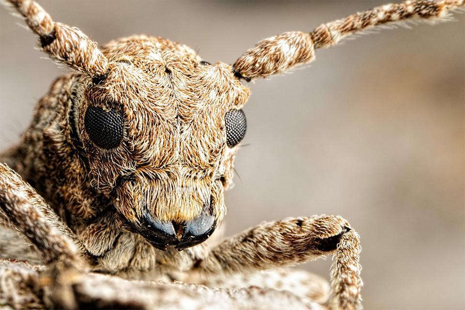 Amazing Long Horned Beetle Photo | One Big Photo