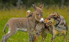 Baby Donkey And A Dog Friendship Photo   One Big Photo