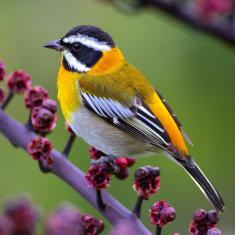 Bird in Cuba