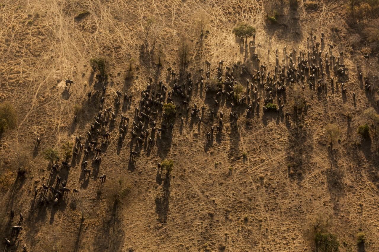 Brent Stirton – 2016 Photo Contest   World Press Photo