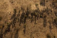Brent Stirton – 2016 Photo Contest | World Press Photo