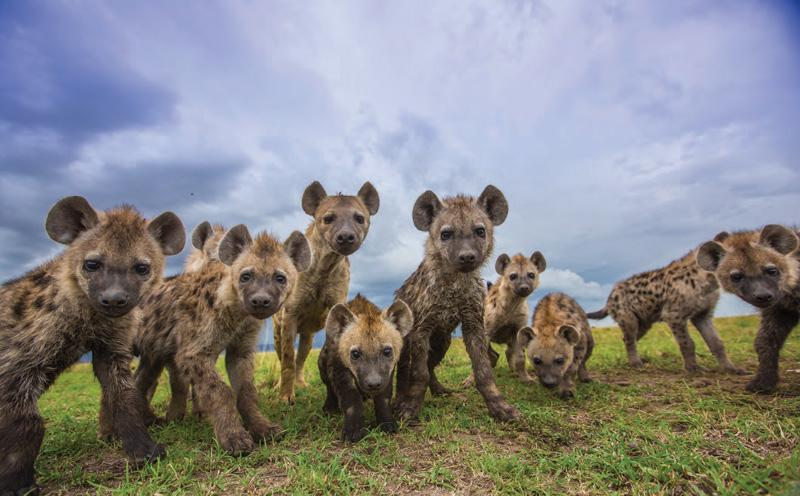 Brilliant photos from Africa on Safari | Discover Wildlife