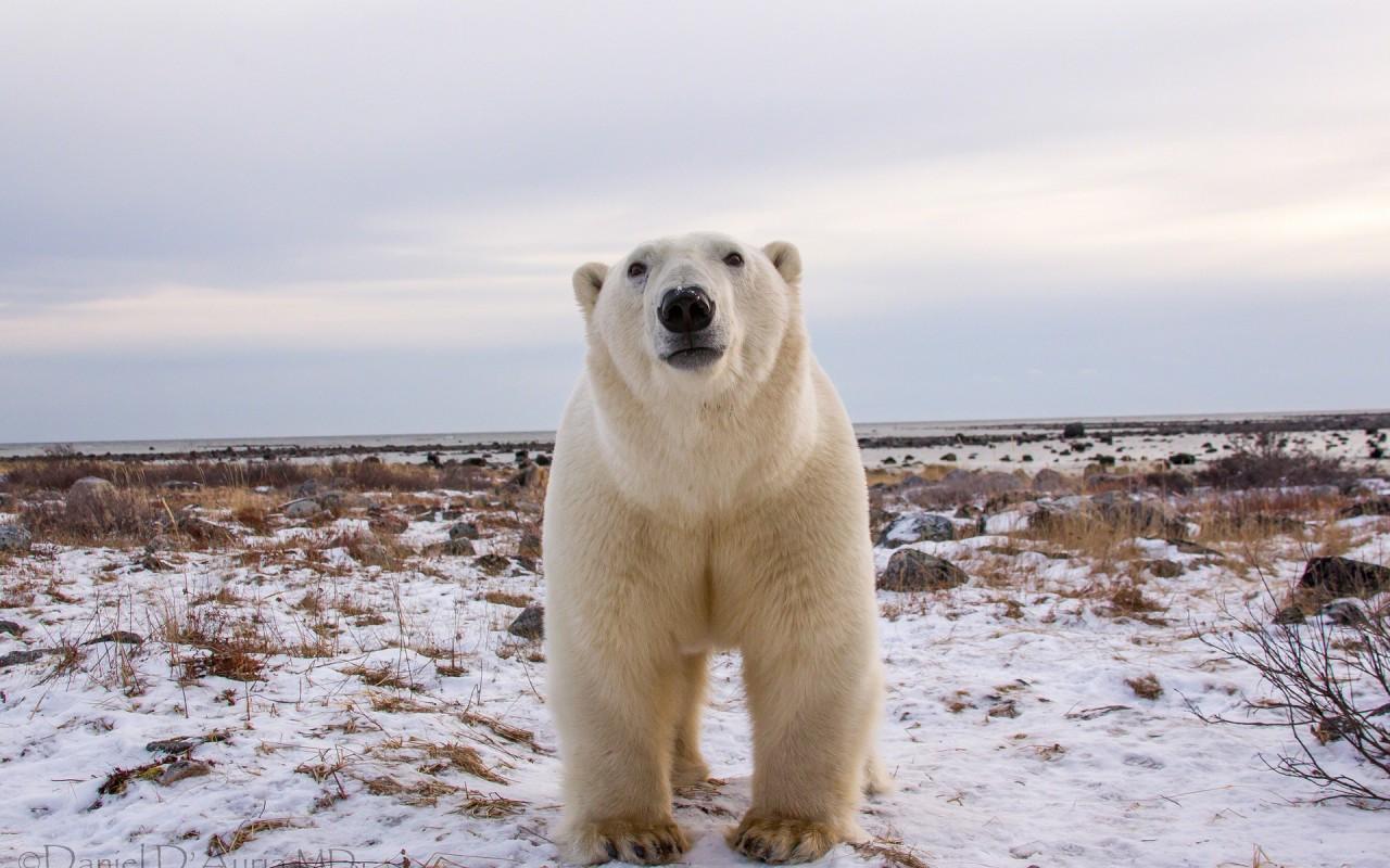 Polar bear. Curious about you.