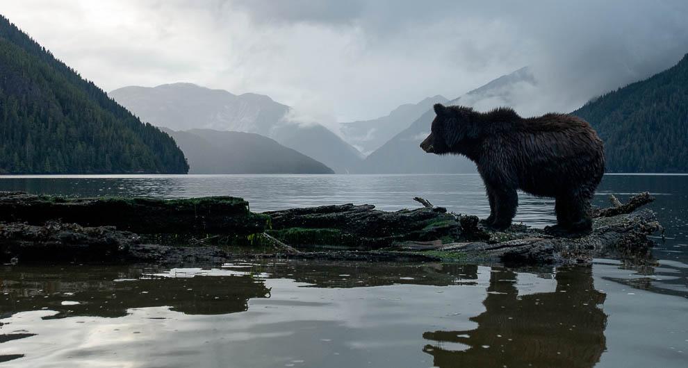 Great Bear Rainforest | BC