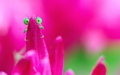 Green-Eyed Damselfly Behind Flower Petal Photo | One Big Photo