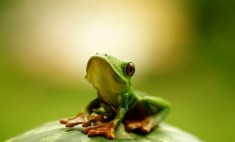 hello, i am cute frog photo | One Big Photo