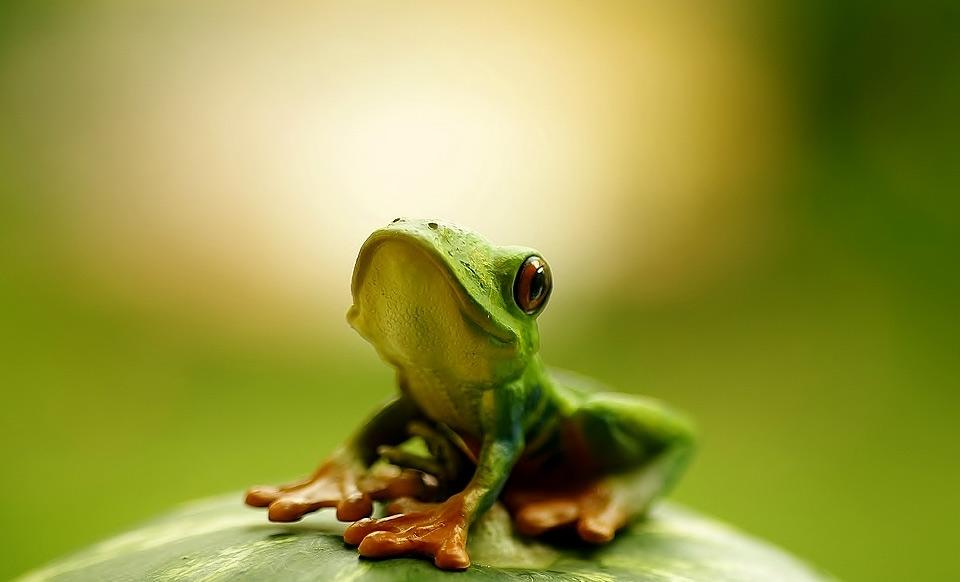 hello, i am cute frog photo | One Big Photo