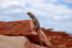 Lizard, Arizona, United States