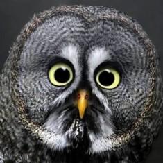 Funny Owl!