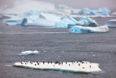 Penguins On Floating Ice Island, Antarctica Photo | One Big Photo