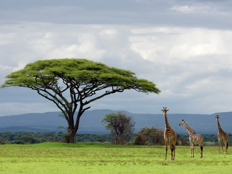 Serengeti National Park, Tanzania | Wildlife Archives 10 Most Beautiful Places In The World