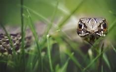 Snake Eyes Photo | One Big Photo