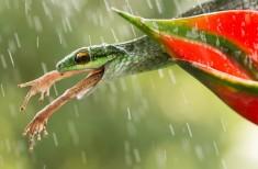 Snake Having Frog On Menu Photo | One Big Photo