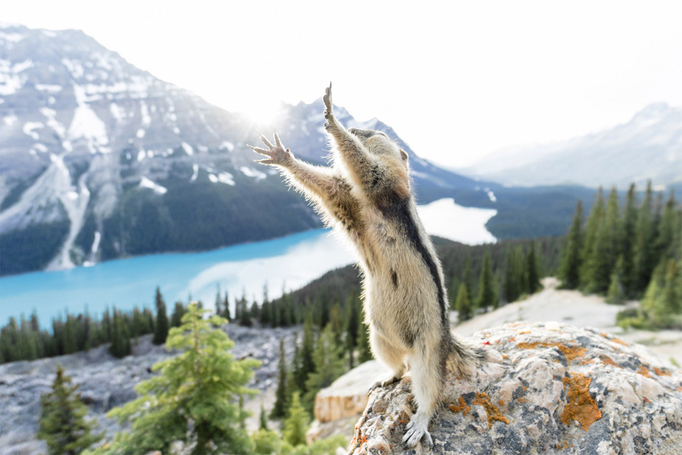Stretching Squirrel Photobombing Photo | One Big Photo