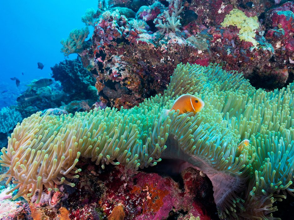 The Great Barrier Reef, Queensland, Australia