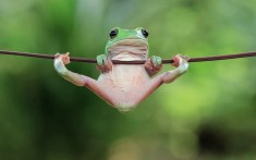 Tiny Tree Frog, Indonesia Photo | One Big Photo