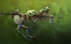 Three Frogs On A Branch Photo | One Big Photo