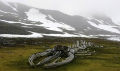 Whale Fossil Found In Antarctica Photo | One Big Photo