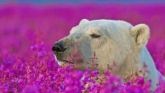 White bear landing in flowers