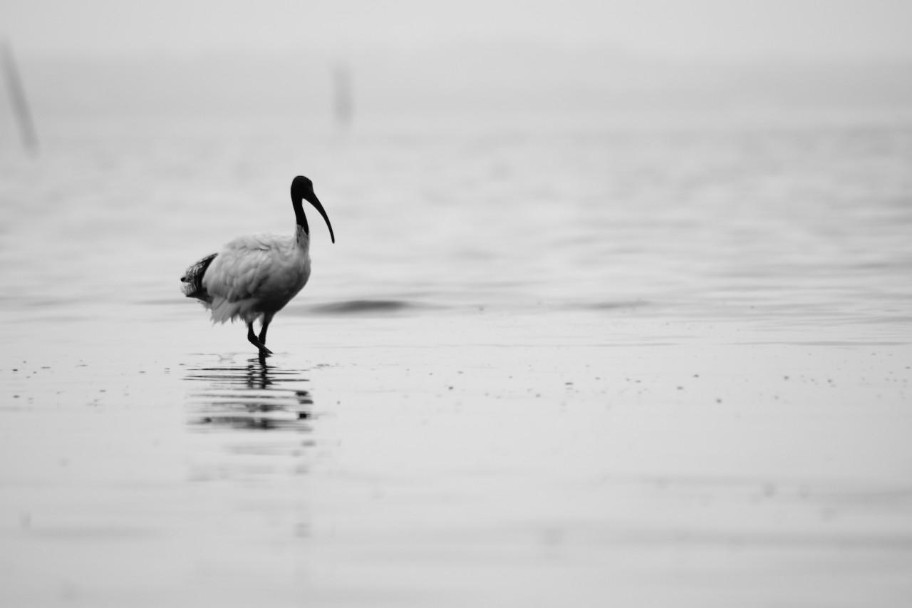 Bird in the sea