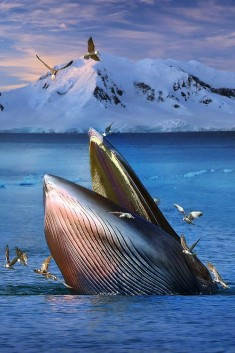Whale and birds