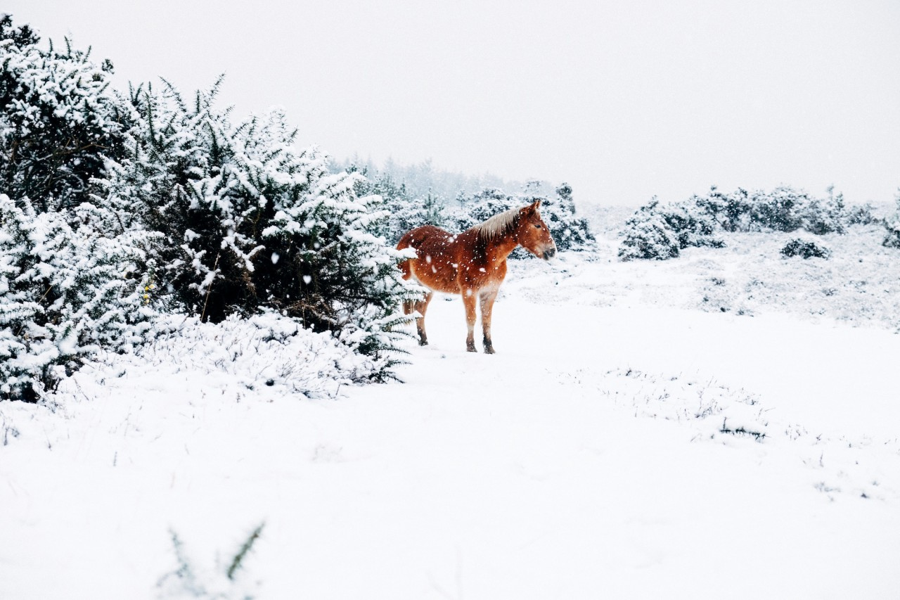 Horse alone in the snow