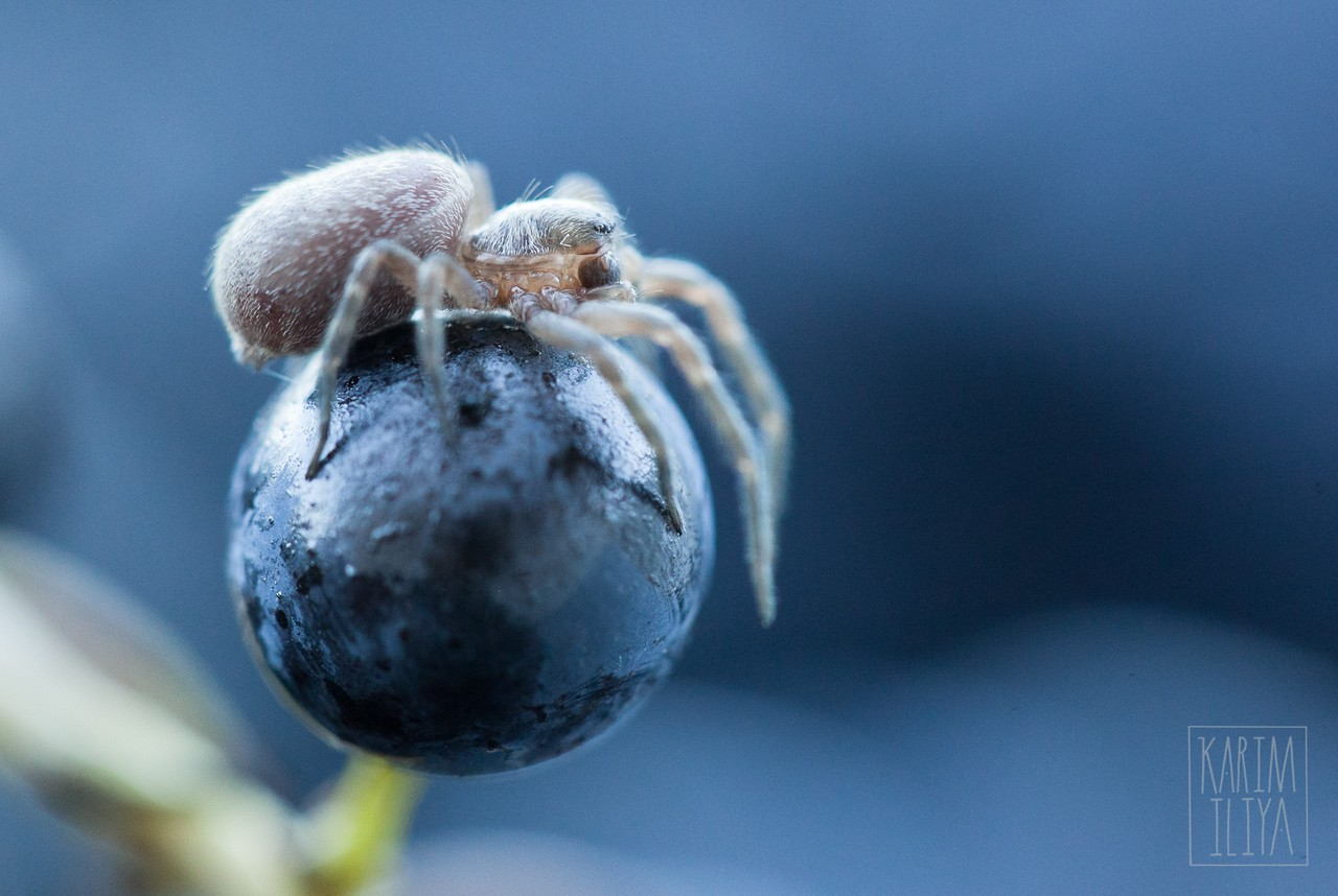 Spider – Karim Iliya Photography