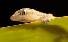 Reptiles and Amphibians – Karim Iliya Photography