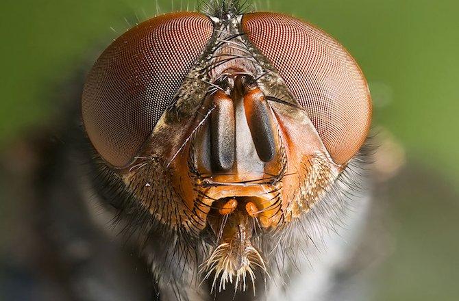 как сонник муха в глаз кадры интимной