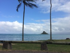 Oahu north shores