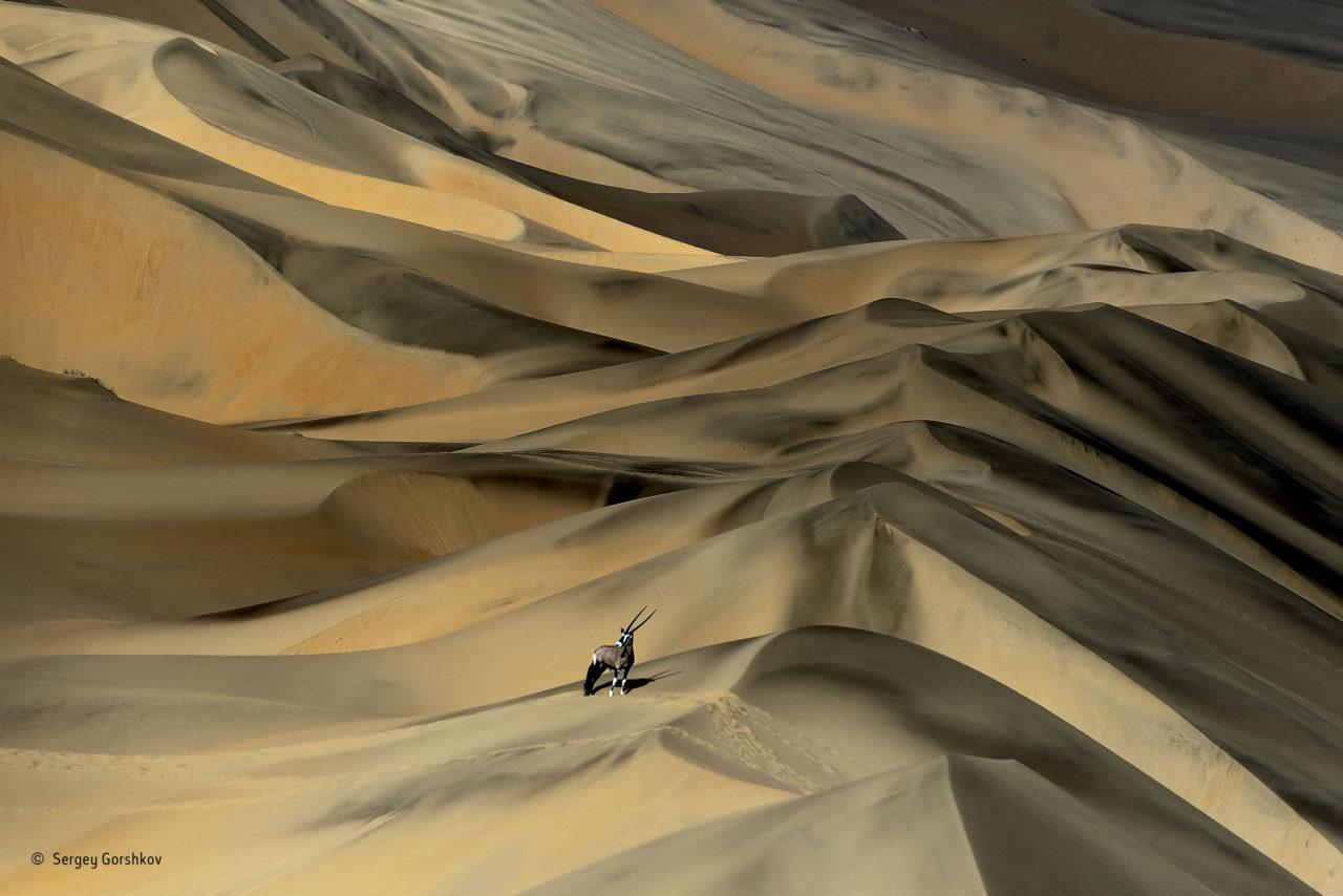 Desert survivor, Namibia