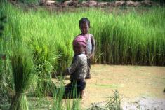 Journée mondiale contre le travail des enfants • PopulationData.net