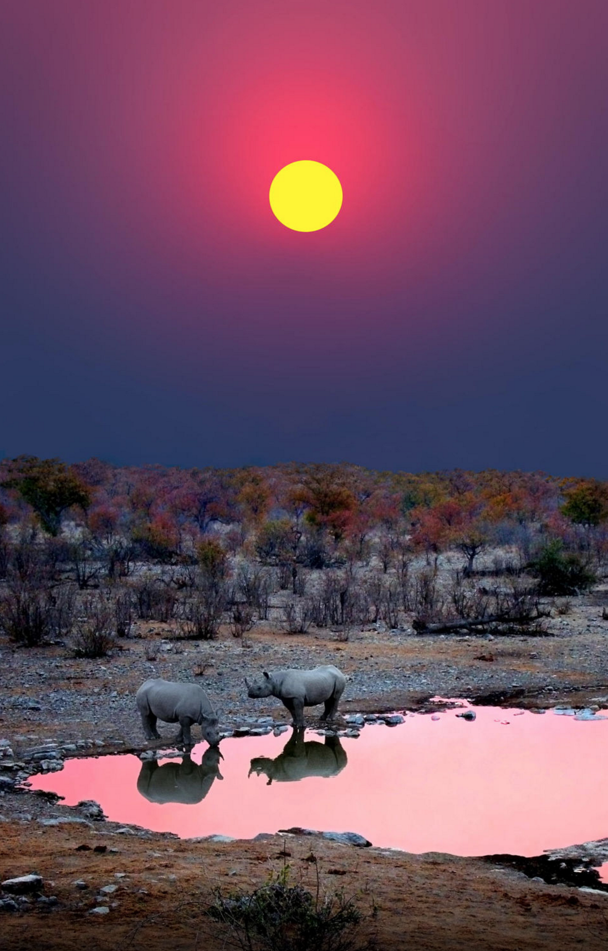 Black Rhinos at a waterhole – Etosha National Park, Namibia
