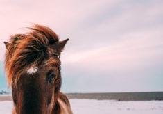Horse in close-up