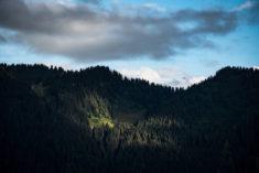 Forest in Leysin, Switzerland