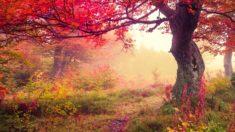 Autumn under the forest