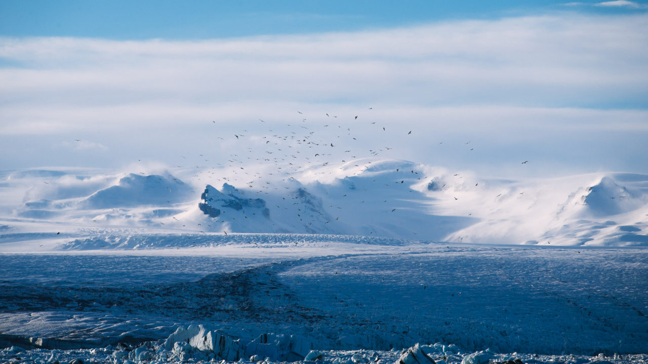 Birds over a glacier, by Anders Jilden