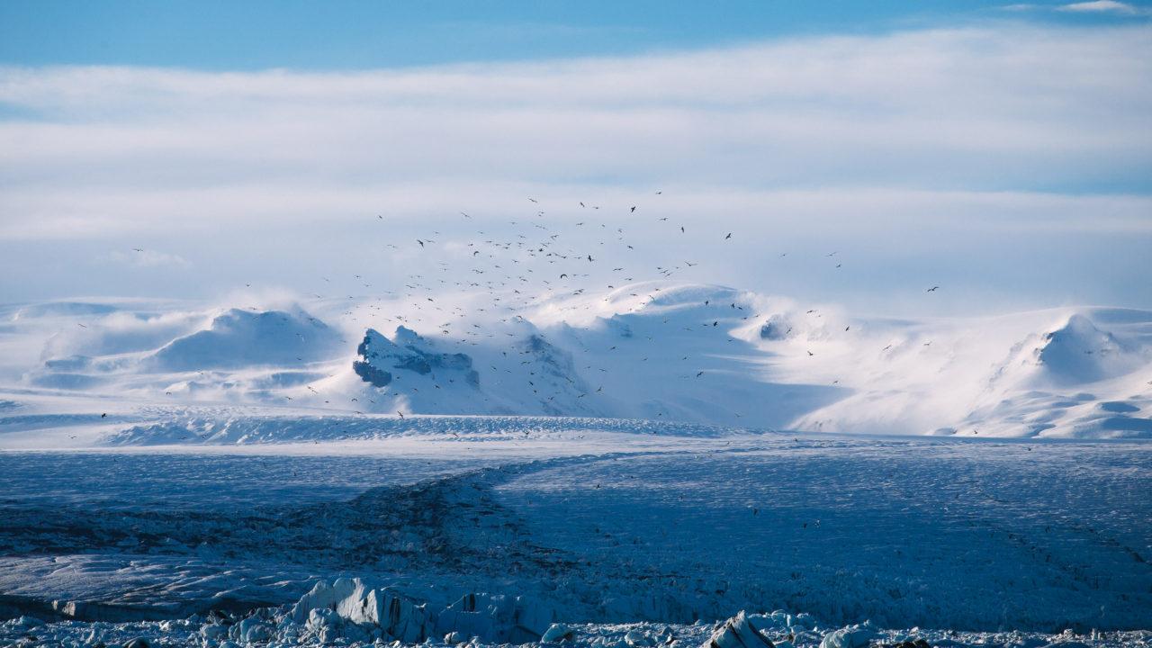 Birds over a glacier, by Anders Jilden