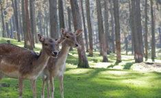 2 young deers