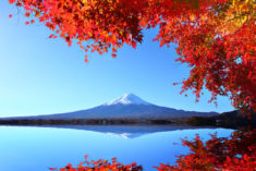 Japan's Autumn Colours