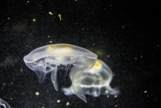 Jellyfish, by Matthias Goetzke