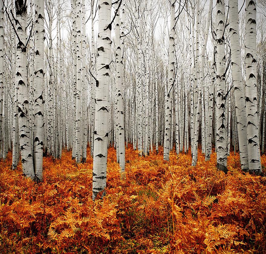Beautiful Autumn Photos