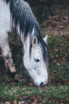 White horse, by Annie Spratt.