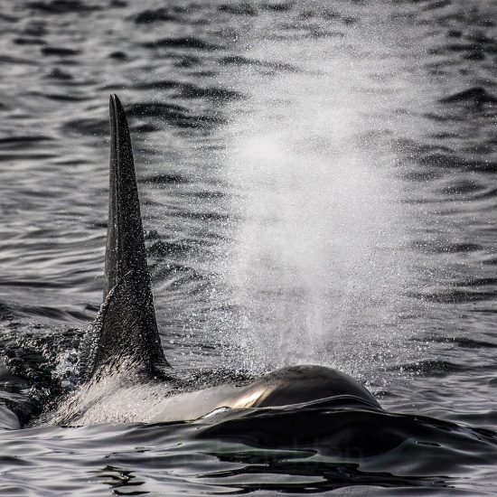 Orca, BC, Canada.