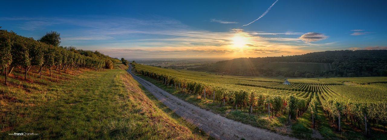 Dorlisheim winery, Alsace